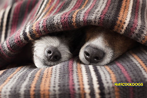 Ways To Keep Dogs Warm In Winter